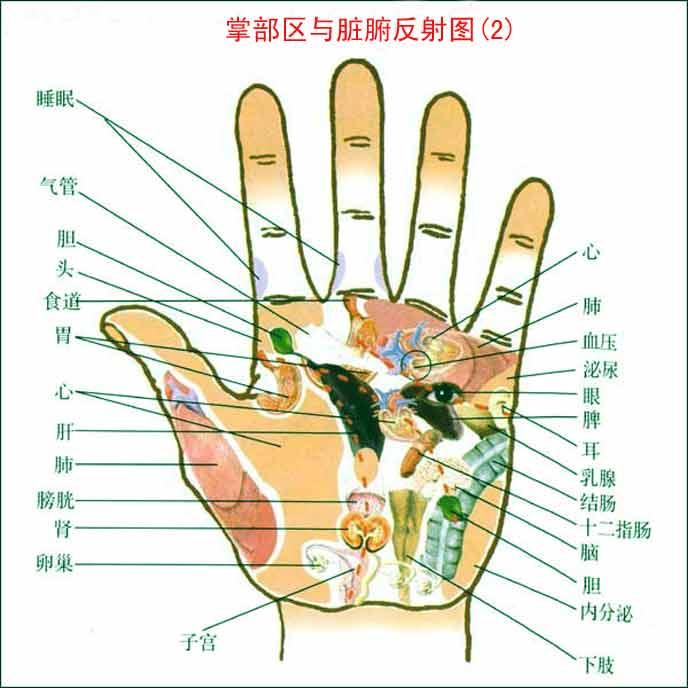 手掌各部位代表什么内脏 - 我爱波罗 - 我爱波罗